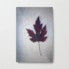 Maple Leaf II Metal Print