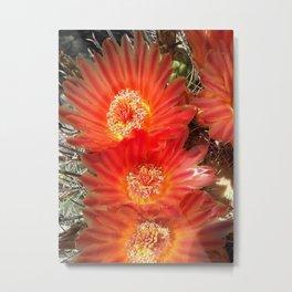 Barrel Cactus Blooms Metal Print