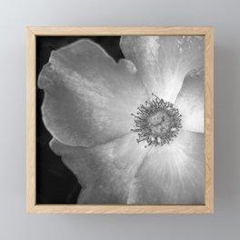 Black and White Rose Framed Mini Art Print