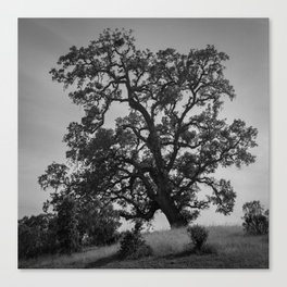 tenacious tree Canvas Print