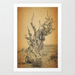 Bristlecone Pine Tree Ancient Tree in the World Art Print