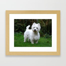 Westie in the garden Framed Art Print
