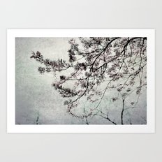clouds of blossoms 2 Art Print