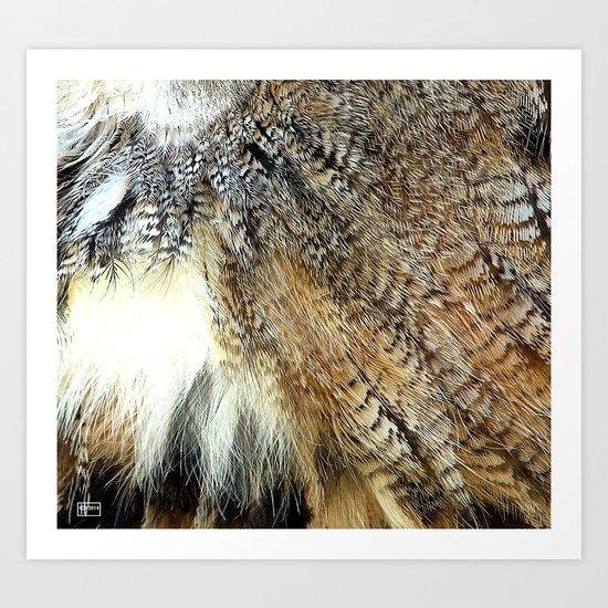 Owl Feathers Art Print