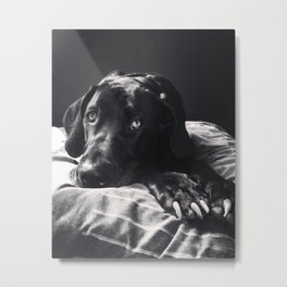 Great Dane (Black and White) Metal Print