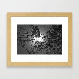 Argentina Tree and Sun Framed Art Print