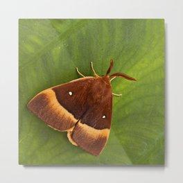 """Colorful moth """"Lasiocampa quercus"""" Metal Print"""