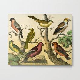 7 Birds Metal Print