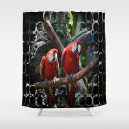 All About the Color Shower Curtain