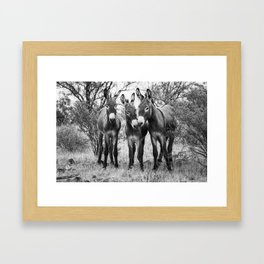 Three Wild Donkeys in the Desert Framed Art Print