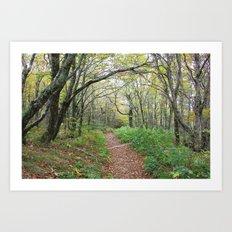 Enchanted Path Art Print