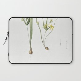 1 Yellow star-of-bethlehem 2 Small star-of-bethlehem  from Les liliacees (1805) by Pierre Joseph Red Laptop Sleeve