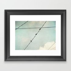 Swallows Framed Art Print