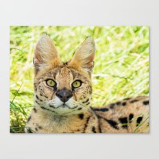 SERVAL BEAUTY Canvas Print