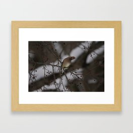 Cedar Waxwing, head titled Framed Art Print