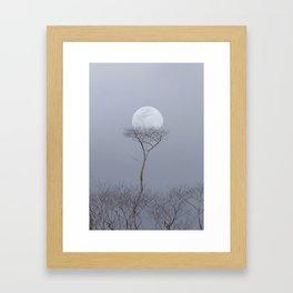 Moonrise Over An Albizia Forest Framed Art Print