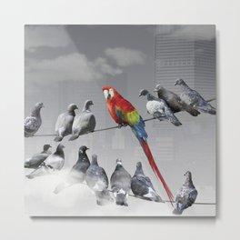 Parrot among the pigeons Metal Print