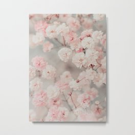 Gypsophila pink blush Metal Print