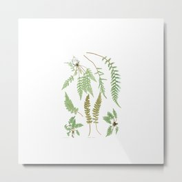 Fern Plants Illustration - Vintage Metal Print