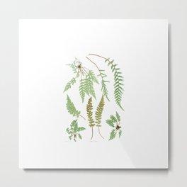 Fern Plants Illustration - Vintage Metal Print