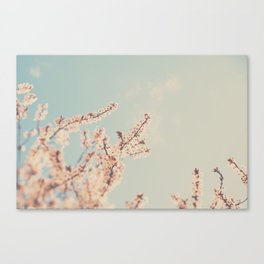 spring is in bloom ...  Canvas Print