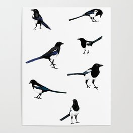 Magpies Poster