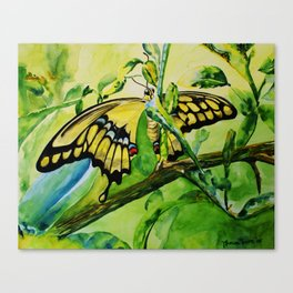 Lime Tree Butterfly II Canvas Print
