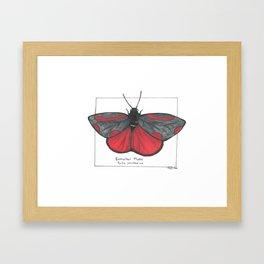 Cinnabar Moth Framed Art Print