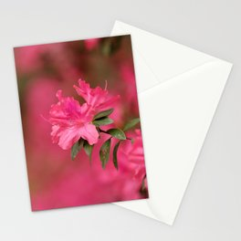 Southern Bloom Stationery Cards