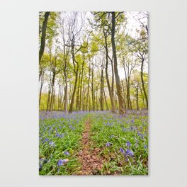 bluebell blanket Canvas Print