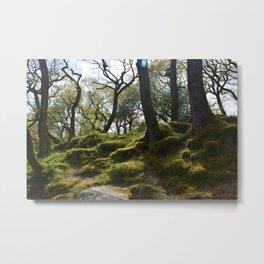 Mossy Woods Metal Print