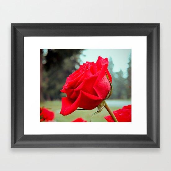 Rose details Framed Art Print