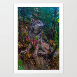 Wolf Pup in the Forest Art Print