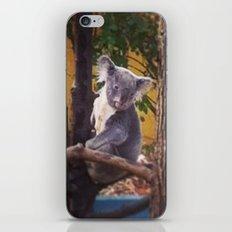 Kozy Koala 2 iPhone & iPod Skin