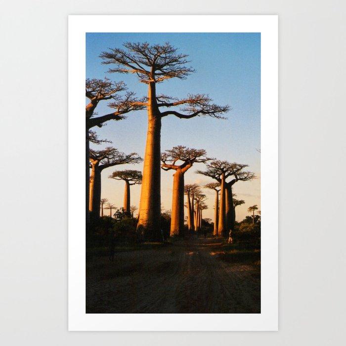 Alley of Baobabs Art Print