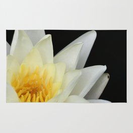 White Lilly 1 Rug
