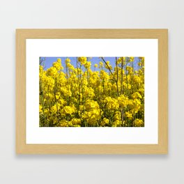 rapeseed in the field Framed Art Print