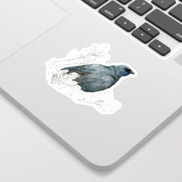 Kōkako, New Zealand native bird Sticker