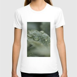Raindrops On Leaf Veins Art Print | Nature Photography | Leaf Veins With Raindrops T-shirt