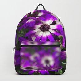 Cineraria Flower Backpack