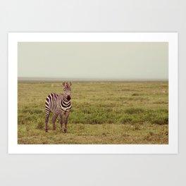 Lone Zebra Art Print