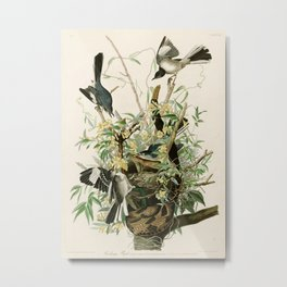 Mocking Bird - John James Audubon's Birds of America Print Metal Print