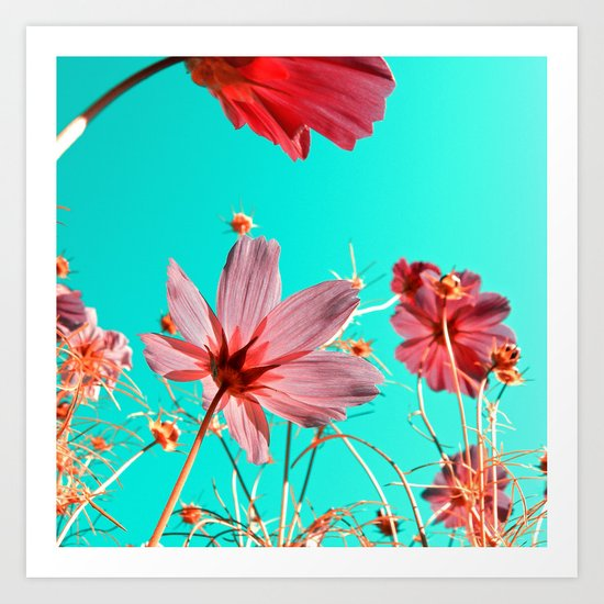 cosmos flowers abstract I Art Print
