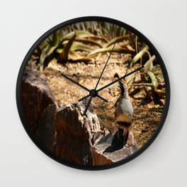 A Male Gambel's Quail Wall Clock