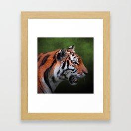 A Leader - Siberian Tiger Art Framed Art Print