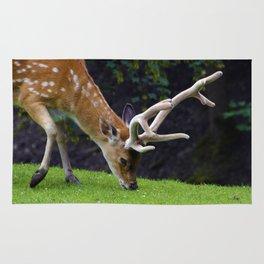 Fallow Deer Rug