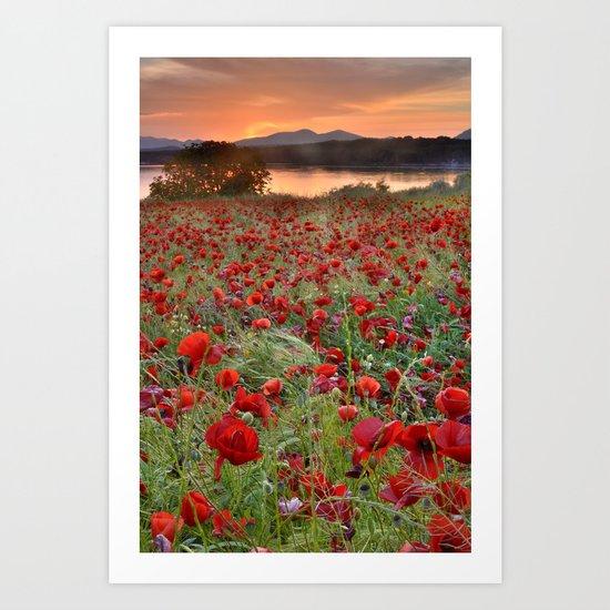 Poppies at the lake at sunset Art Print