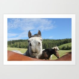 Horse Smile Photography Print Art Print