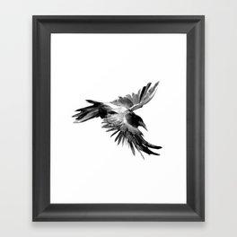 Flying Raven Framed Art Print