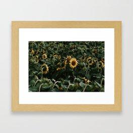 Sunflowers // Framed Art Print